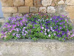Pretty Flower Box in old olive oil stone container